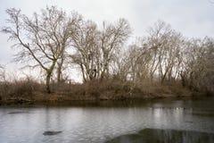 Part of the delta of river Evros, Greece Stock Photos