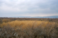 Part of the delta of river Evros, Greece Royalty Free Stock Image