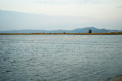 Part of the delta of river Evros, Greece, with many pink flaming Stock Photography