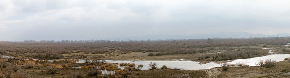Part of the delta of river Evros, Greece, panoramic view Royalty Free Stock Photo