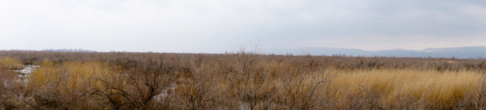 Part of the delta of river Evros, Greece, panoramic view Stock Photos