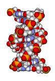 Part of a DNA double helix. (a space filling model) isolated on a white background Stock Photography