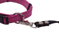 Part of the dog collar and leash. Royalty Free Stock Photo