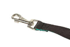 Part dog leash with carabiner. Stock Photos