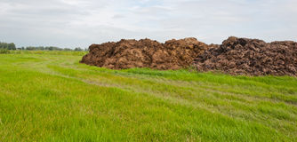 Part of dung heap in the field. Part of a dung heap in a Dutch landscape Royalty Free Stock Photos
