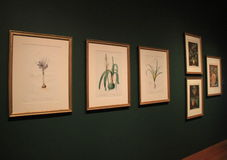 Part of extensive framed floral art collection, Cleveland Art Museum, Ohio, 2016. Part of extensive exhibit covering framed floral art, in prints, drawings and Royalty Free Stock Photo