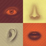 Part of Face. Of lines (eye, nose, ear and mouth Royalty Free Stock Photo