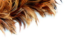 A part of Feather duster Stock Photos
