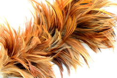 A part of Feather duster Royalty Free Stock Photo