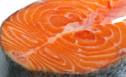 Part of fish. Stock Photography