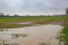 Flooded and deeply rutted field Royalty Free Stock Photography