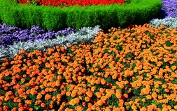 Part of the flowerbed Royalty Free Stock Photos
