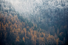 Part of a forest covered with snow Stock Photo