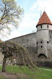 Part of the fortress wall with a watchtower in old Tallinn, Estonia. The fortress wall of gray stone, watchtower with a pointed red roof, loopholes, city park stock photos