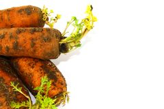 Part of fresh carrot with ground on white background royalty free stock image