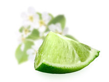 Part of fresh lime Royalty Free Stock Photography