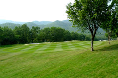Part of golf field. Part of golf court, with elaborate maintenance grass land, and gree plant trees Stock Photo
