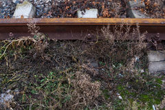 Part of the ground area with a moss and grass. And rail Stock Photos