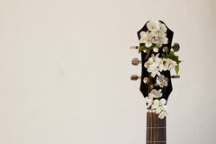 Part of the guitar with blossom cherry. Part of a guitar on a white background with several cherry blossoms. Concept of music, hobby, creativity Stock Photography