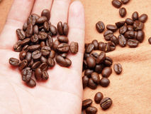 Part of hand with coffee crop beans on fabric textile Stock Photo