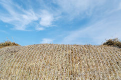 Part of haystack. Stock Photos