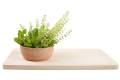 Part of holy basil pile in bowl Royalty Free Stock Image
