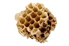 Part of hornets nest Stock Image