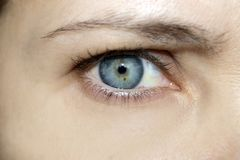 Part of the human body, blue eyes the color of a white man. With black eyelashes and eyebrows stock image