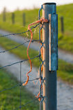 Part of an iron fence on a country road Royalty Free Stock Images