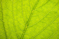 Part of leaf Royalty Free Stock Photos