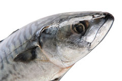 Part of mackerel Stock Photo