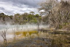 Part Of The Geothermal Public Park In Rotorua, New Zealand Royalty Free Stock Image