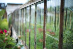 Part of old greenhouse. Royalty Free Stock Images