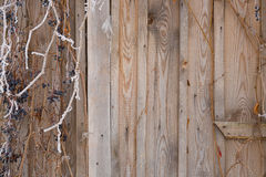 Part of an old wooden wall Stock Image