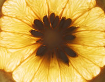 Part orange Photos libres de droits