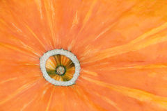 Part of orange pumpkin, natural background Stock Photos