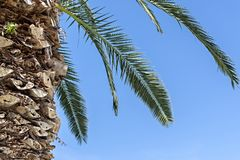 Part of a palm tree against the sky Royalty Free Stock Images