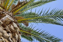 Part of a palm tree against the sky Royalty Free Stock Photo
