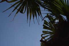 Palm Tree Summer blue Sky Vacation Scenery Stock Photo