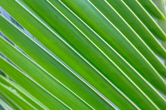 Part of palm tree Stock Image