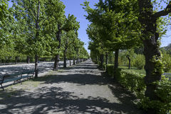 Part of the park in Schonbrunn Royalty Free Stock Photography