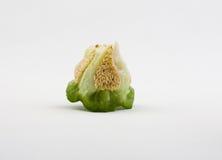 Part pepper. Grain cabbage stalk Stock Image
