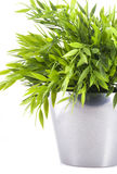 Part of a plant. Stock Images
