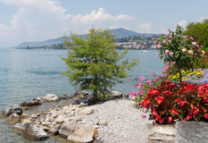 Part of promenade Montreux. Part of promenade with the beautiful flowers, a lonely tree on the small beach and city scape on the background. City of Montreux royalty free stock photography