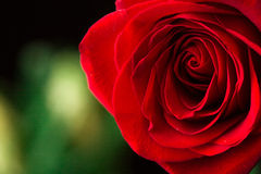 Part of rose on green. Macro Royalty Free Stock Photo