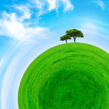 Part of a spherical panorama of a green meadow with trees Royalty Free Stock Images