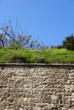 Vegetation on a Stone Wall Stock Photos