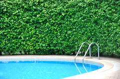 Part of swimming pool and plant fence Royalty Free Stock Image