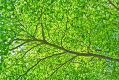 Part of tree branch and leaf Stock Photography