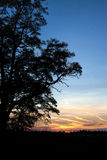 Part of a tree at sunset. Royalty Free Stock Photos